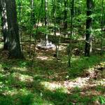 Rest of the Forest, view 2A